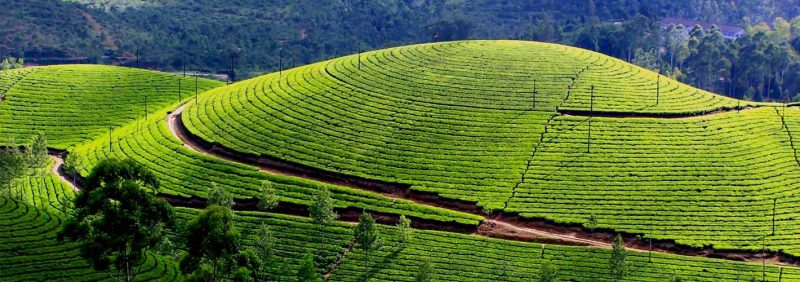 Navbharat Group Tours Kerala 5N/6D